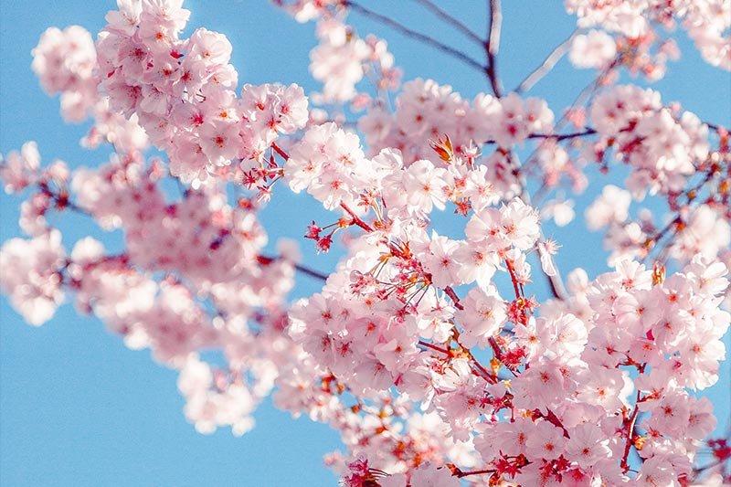 overexposed-crabapple-flowers.jpg