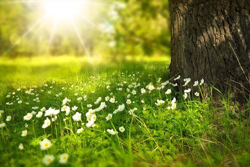 overexposed-grass-photo.jpg