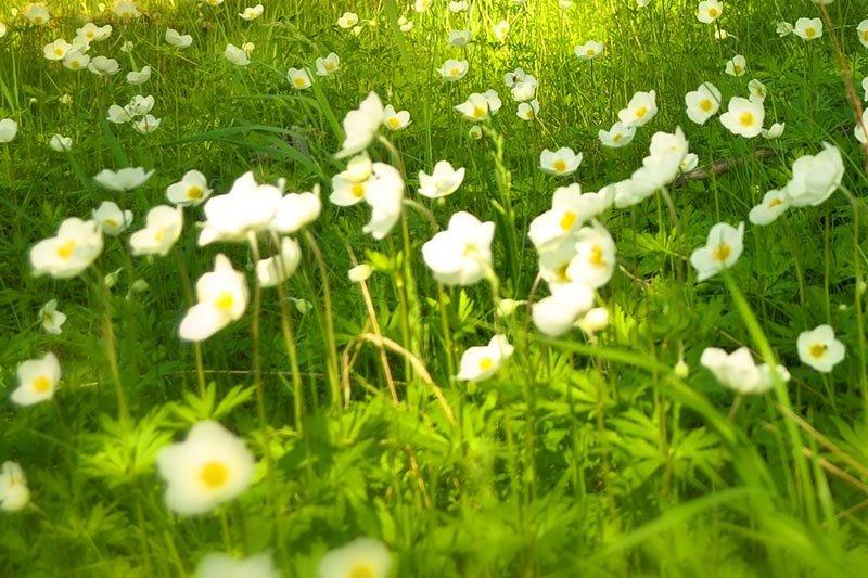 overexposed-white-flowers.jpg