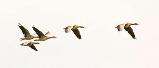 photoshop-original-duck.jpg